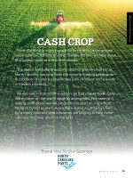 Cash Crop 2019