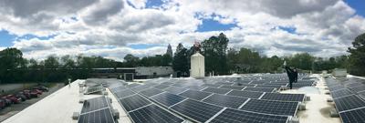 Birdsong solar panels